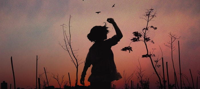 Child and birds at sunset