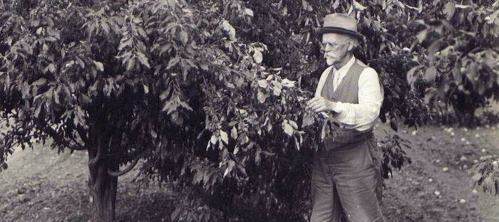 N.E. Hansen at work, around 1935. From the collection of the South Dakota Agricultural Heritage Museum, South Dakota State University. Brookings, SD