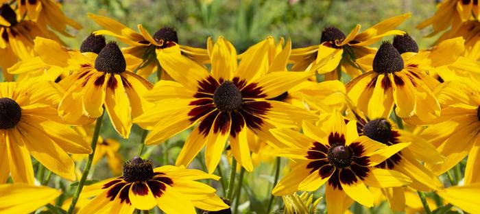 Yellow and maroon wildflowers