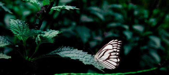Where Do Butterflies Sleep Daves Garden