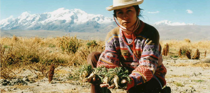 Katia Humala-Tasso with a harvest of Maca in Belen (Experimental Station of the Faculty of Agronomy of San Andrés University of La Paz) near Achacachi (Bolivia)