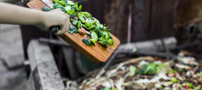 Green kitchen scraps deposited in compost
