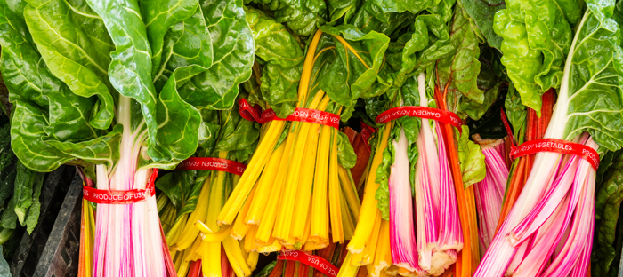 Bunches of colorful, harvested Swiss Chard