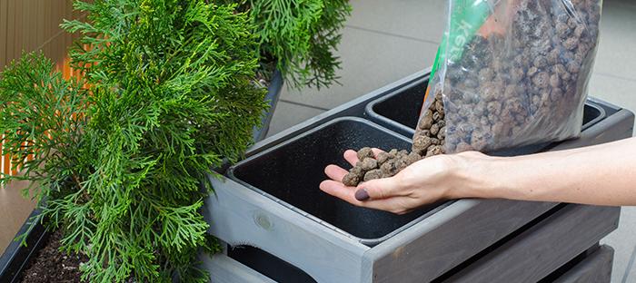 Potting Loose Soil for Thuja Tree