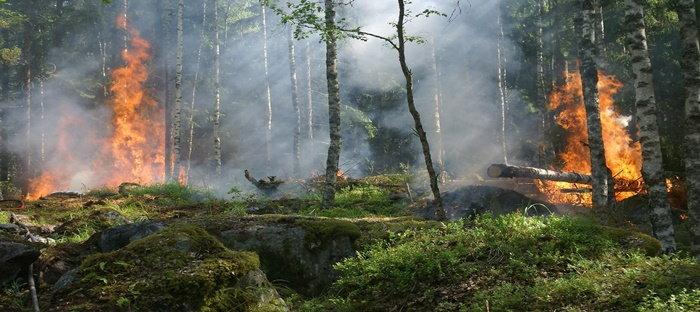 forest wildfire scene