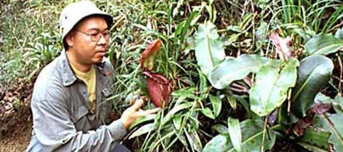 Man Examining Rajah Brooks Pitcher Plant, Kinabalu National Park, Borneo