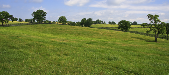 Hill of Kentucky Bluegrass and Trees