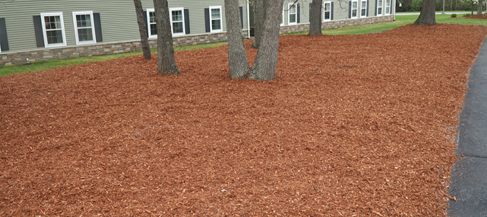 Entire Lawn Covered in Mulch with Trees and Apartments