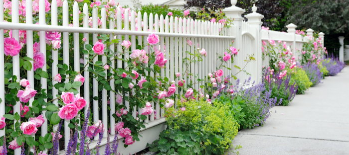Curbside Flowers Through White Fence