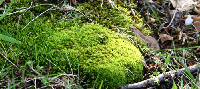 Mound of Moss Growing on Twigs and Ground