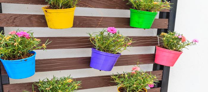 Colorful Wall Planters on Wood Slats