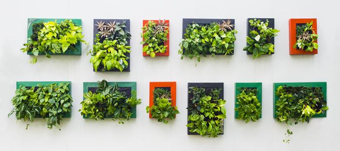 Wall of indoor plants