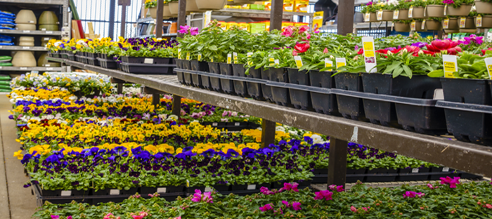 Garden Section of Home Improvement Store