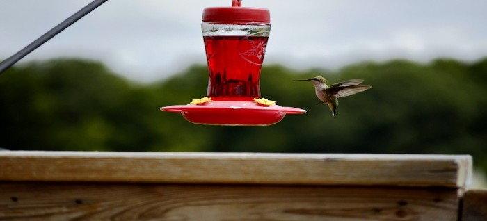 hummingbird hovering at a feeder
