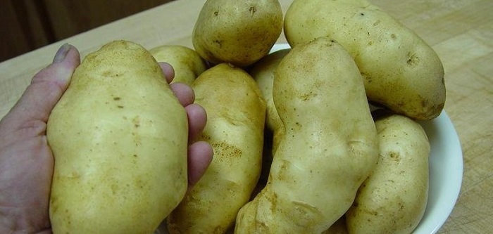 hand holding potatoes
