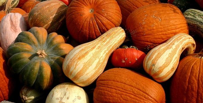various pumpkins and winter squash