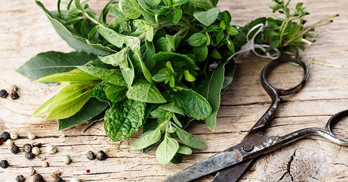 several varieties of cut herbs