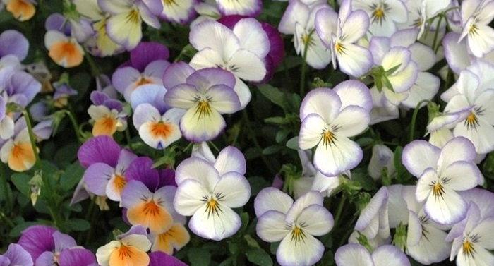 plantfiles