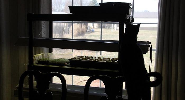 seedling rack