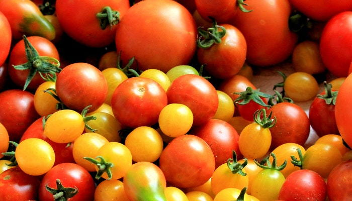 red and gold cherry tomatoes