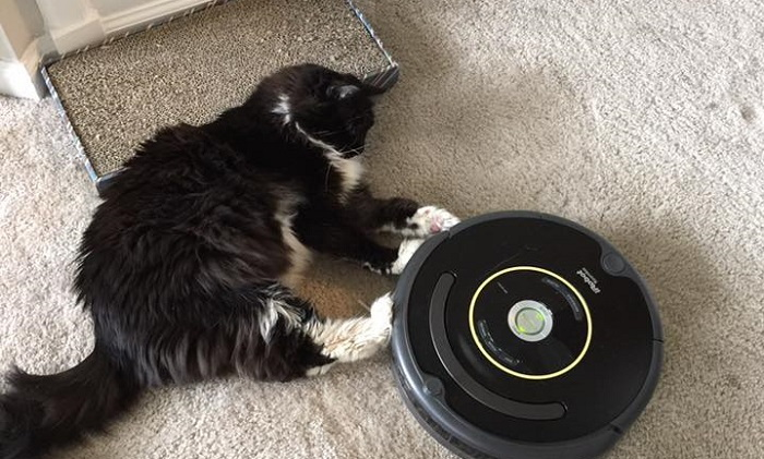 Cat and roomba