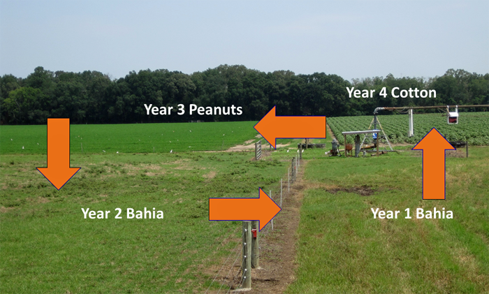 a graphic explaining a field's crop rotation strategy