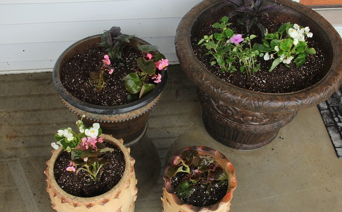 resin and antique containers planted with flowers