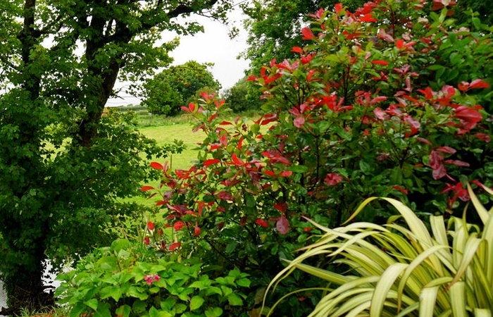 Creating A Successful Hummingbird Garden - Dave\'s Garden