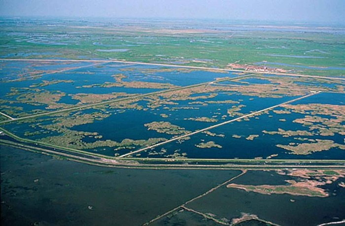 Pacific Flyway before image