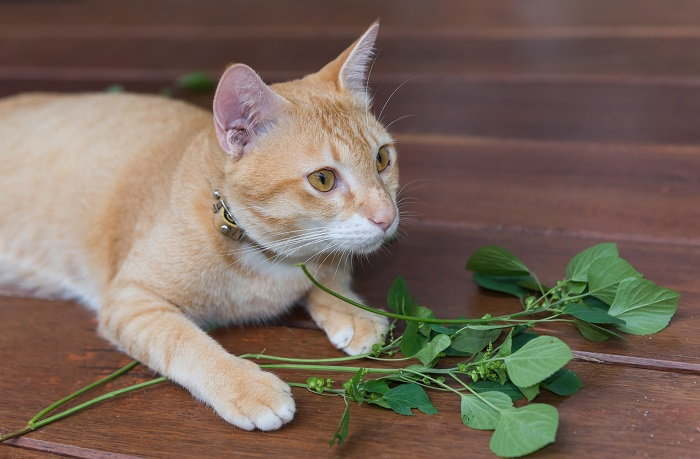 Cat happy indoor garden catnip and beyond dave 39 s garden for Indoor gardening with cats