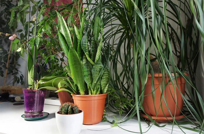it's important to gradually acclimate your plants to the indoors before moving them in for good