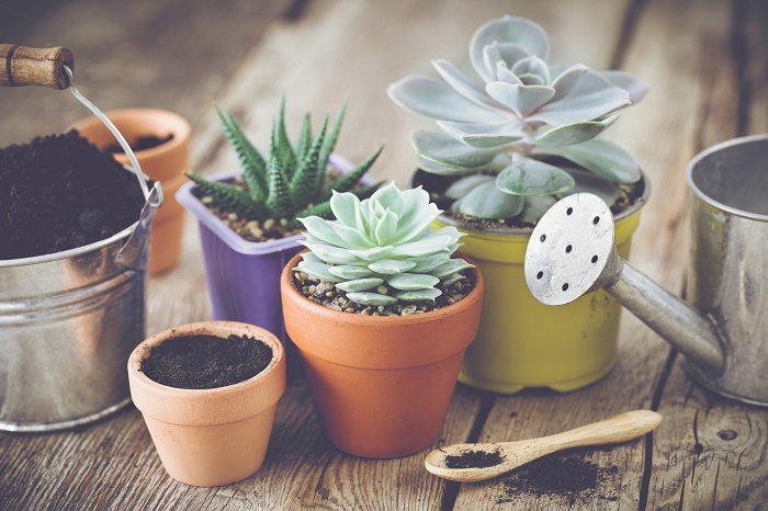 it's important to give your succulents everything they need to thrive