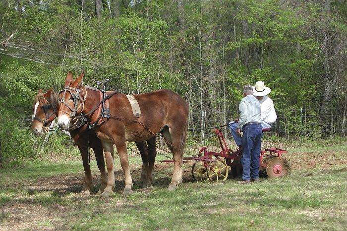 homesteading, draft animals