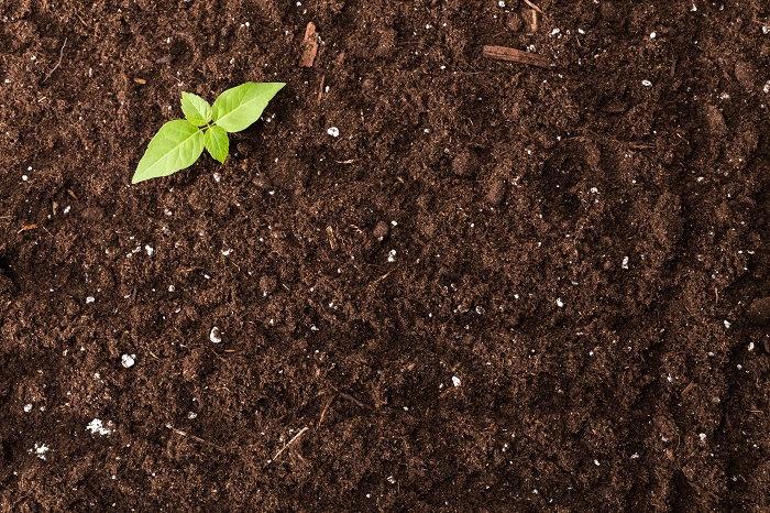 prepared soil and seedling