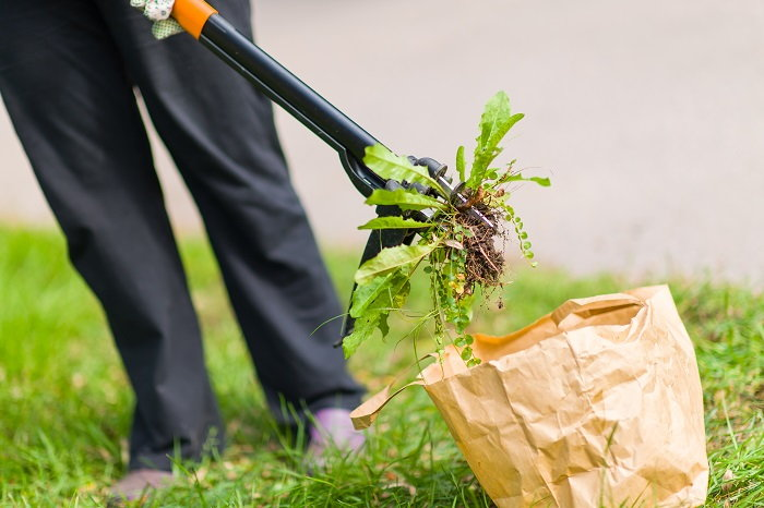 it's important to remove as many weeds as you can find from your yard