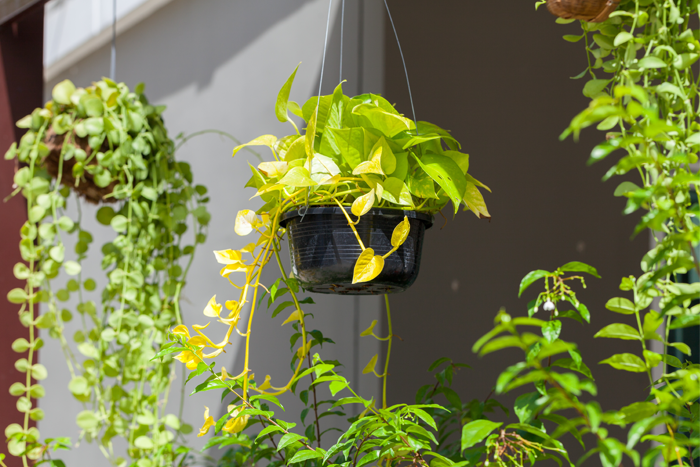 Suspended basket with vines and leaves hanging over edges