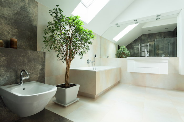 place your houseplants near sources of natural daylight