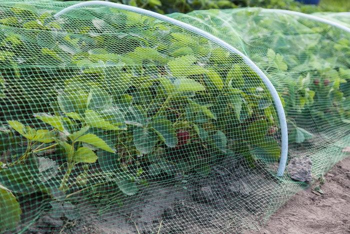 row cover on garden plants