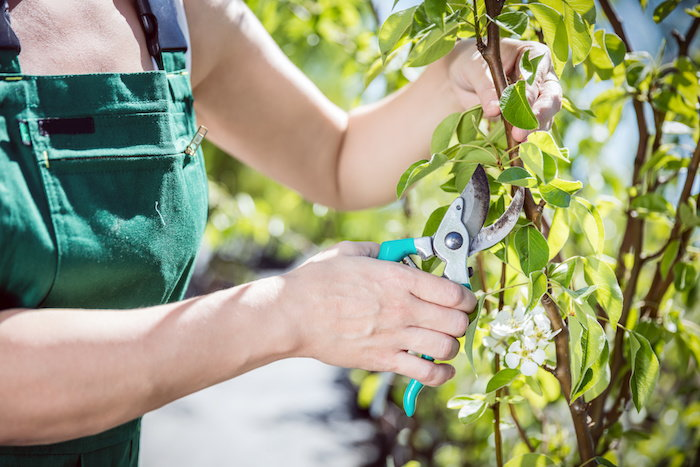 depending on the plant you're working with, you'll want to take a particular type of cutting to ensure optimal growth