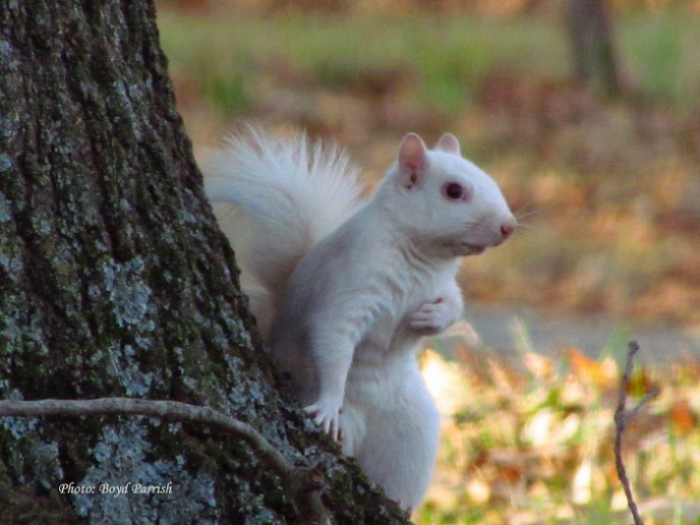 white squirrel by tree