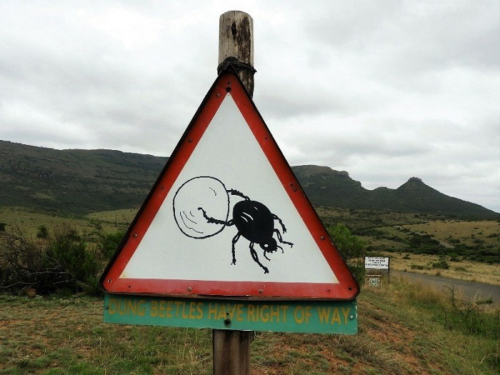 dung beetle crossing sign