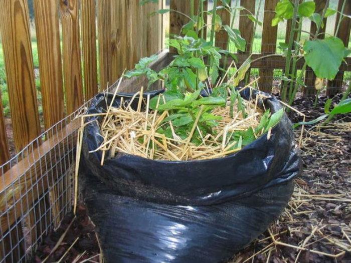 garbage bag planter