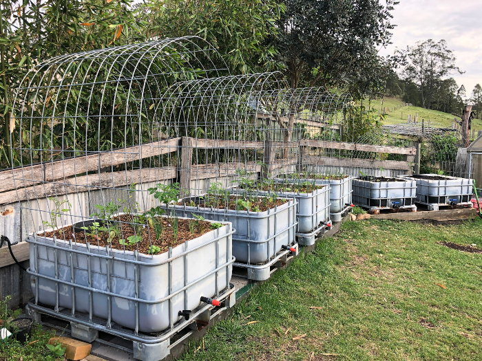 IBC containers used as planters