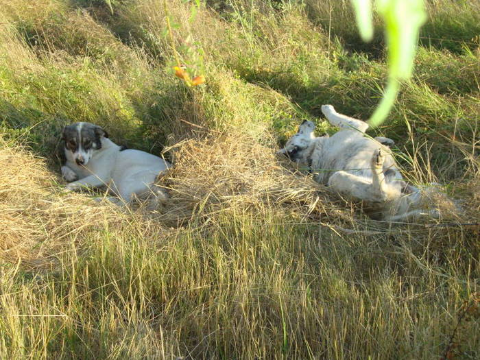 Zoozy and Trica laying in their grass lairs