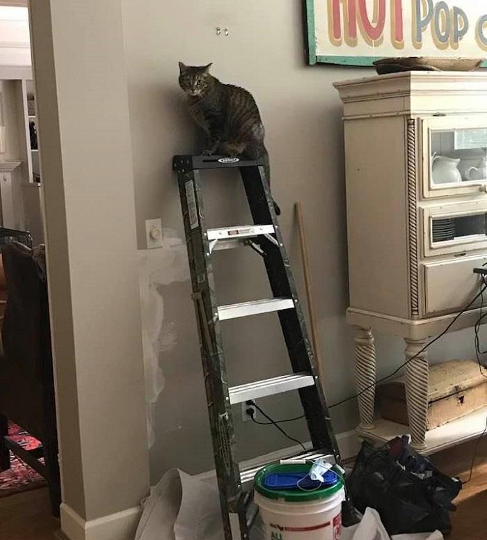 cat on ladder