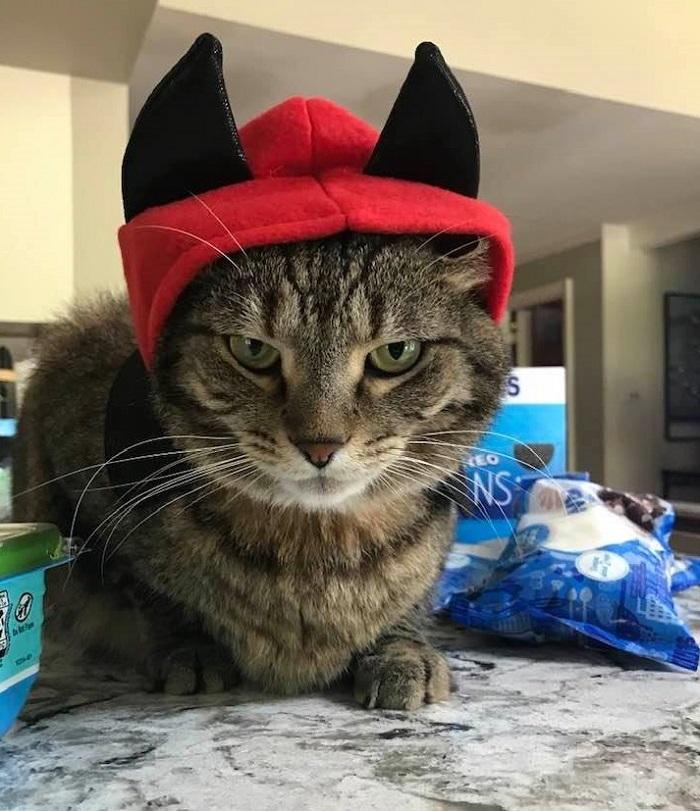 cat in devil hat