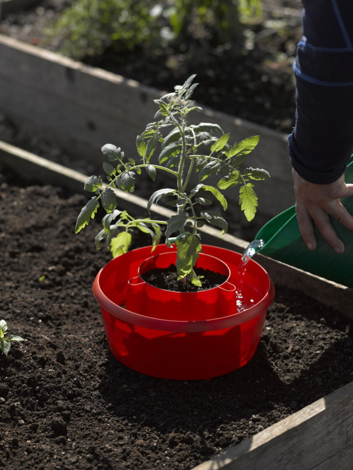 tomato halo