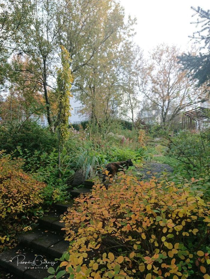 autumn in an icelandic garden