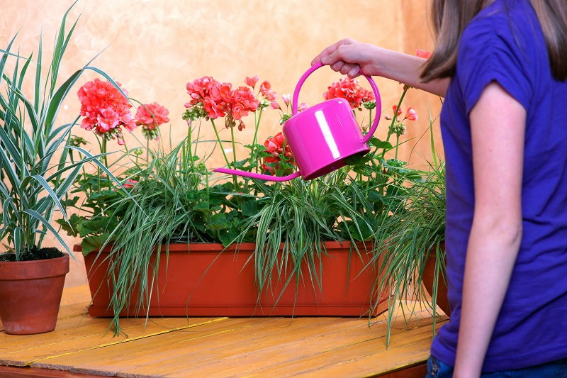 tabletop gardening in pots and planters