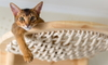 Cat in a netted bed